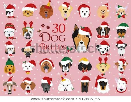 yorkshire dog with xmas santa hat stock photo © ozaiachin