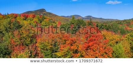 Színes domboldal ősz izzik citromsárga Colorado Stock fotó © emattil