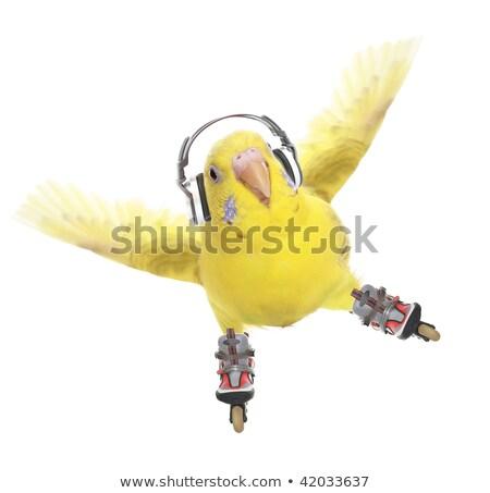 funny parrot roller stock photo © rastudio