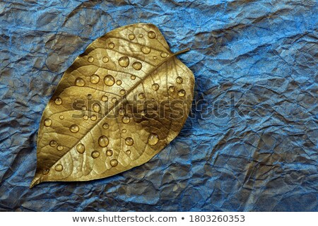 golden leaf with droplets stock photo © toaster
