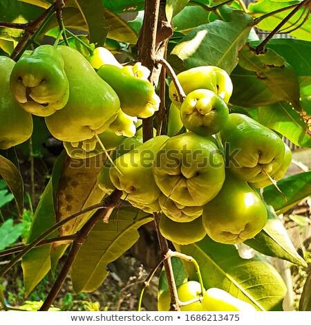 Gül elma ağacı bahçe su soyut Stok fotoğraf © prajit48