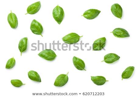 Foto stock: Fresco · manjericão · folhas · isolado · branco · natureza