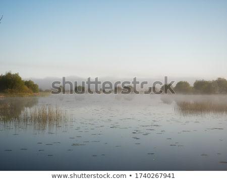 川 · ノルウェー · 天気 · 空 · ツリー - ストックフォト © thomland