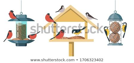 鳥 木製 家 鳥 白 ストックフォト © Roka