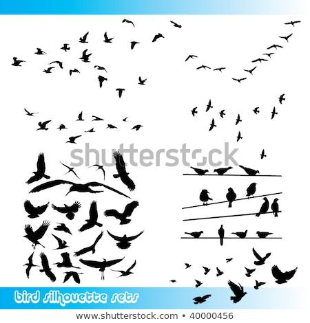 Pombo pássaro arame nublado céu Foto stock © sirylok