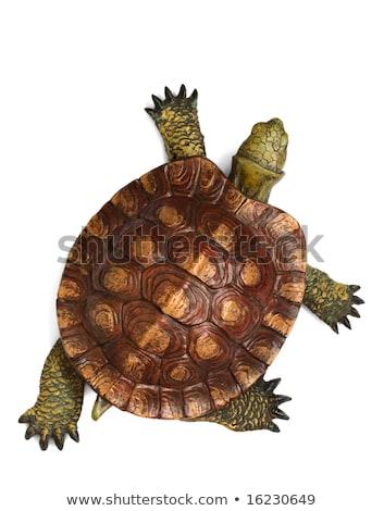 wooden turtle isolated stock photo © michaklootwijk
