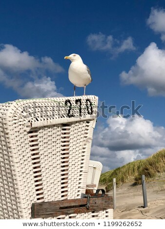 seagull and beach chair stock photo © mobi68