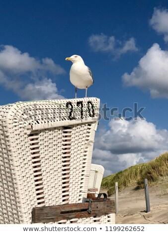 Seagull and beach chair Stock photo © mobi68