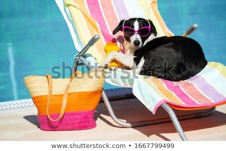 Piscina hamaca lujo exótico Resort jardín Foto stock © Kurhan