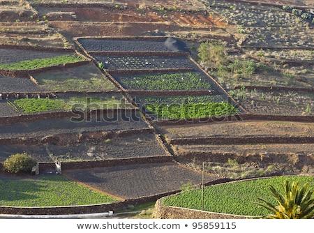 field with irrigation system on volcanic lapilli ground Stock photo © meinzahn