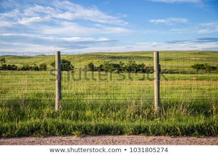 Vuota bovini primavera piccolo farm Foto d'archivio © CaptureLight