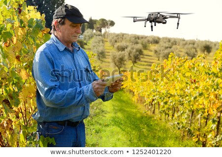 Beautiful Chianti region in Tuscany Stock photo © Hofmeester