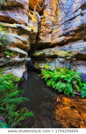 mountain stream and pool of water stock photo © gregory21