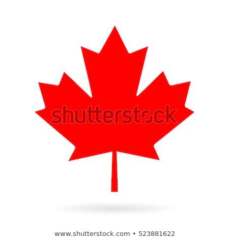 красный Maple Leaf изолированный белый природы лист Сток-фото © hin255