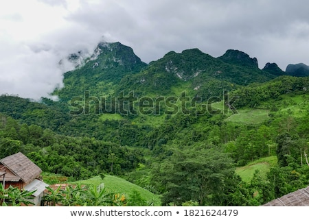 Lush high mountains covered by mist Stock photo © Yongkiet
