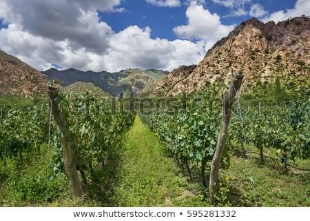 Argentína · természet · hegy · kék · hegyek · piros - stock fotó © xura