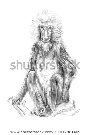 macaco · masculino · retrato · animal · floresta · Camarões - foto stock © kirill_m