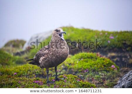 sólyom · föld · festői · Saskatchewan · madár · szín - stock fotó © arrxxx