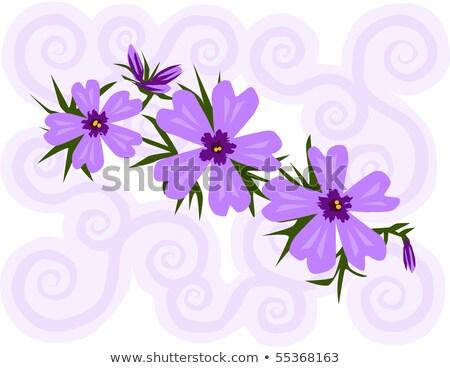 púrpura · flores · flor · primavera · naturaleza · arte - foto stock © aleishaknight