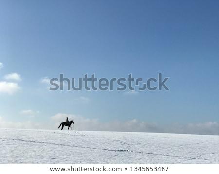 Horses on Snowy Field in Winter Stock photo © tainasohlman