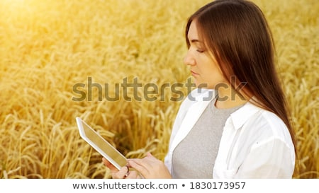 Agronomist examining ripe wheat crop spikelets Stock photo © stevanovicigor