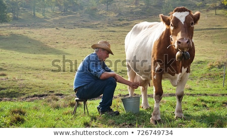 Man Milking Cow In Farm Livestock In Ranch Stock photo © diego_cervo