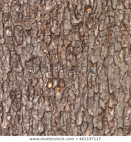 Wooden Bark. Seamless Tileable Texture. Stock photo © tashatuvango