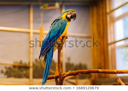 Beautiful bird blue parrot sitting on a wooden perch isolated on white background. Vector cartoon cl Stock photo © Lady-Luck