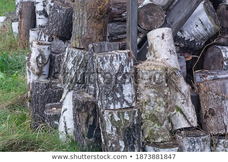 pieces of logs birch on a green grass Stock photo © ruslanshramko