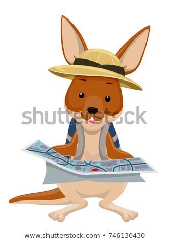 Kangourou explorateur chapeau illustration carte Photo stock © lenm