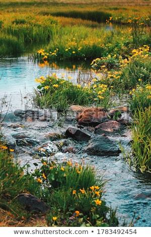 vízesés · hegyek · tavasz · tájkép · folyó · gyönyörű - stock fotó © lovleah