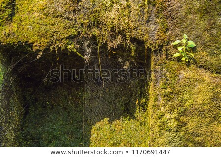 Old stone brick walls of natural stone with moss dust cobweb and mud textured background Stock photo © galitskaya