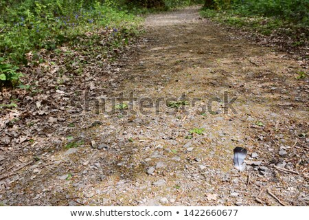 Wood pigeon feather lies on a wide stony path in woodland Stock photo © sarahdoow