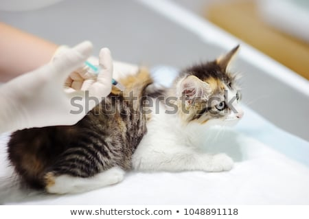 lekarz · weterynarii · wstrzykiwań · cute · psa · medycznych · biuro - zdjęcia stock © ilona75