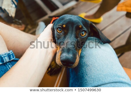 Dog looking through lap of photographer at camera Stock photo © Kzenon