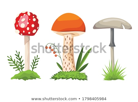 Amanita and porcini mushroom grows Stock photo © romvo