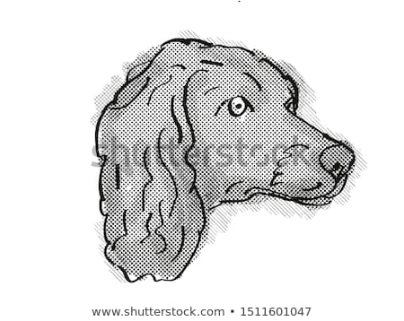 Boykin Spaniel Dog Breed Cartoon Retro Drawing Stock photo © patrimonio