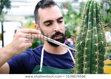 Experto hombre trabajo invernadero cactus ocupado Foto stock © diego_cervo