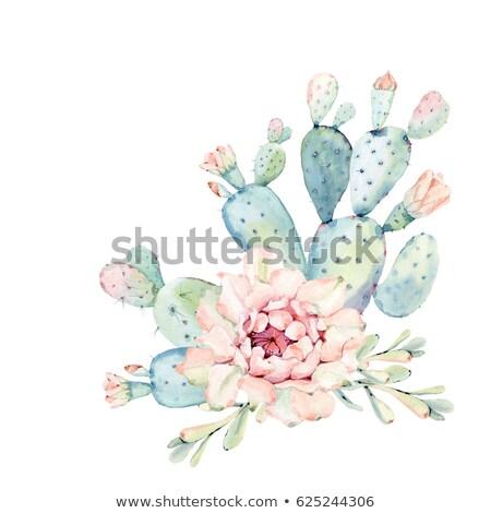 Watercolor cactus blooming Stock photo © balasoiu