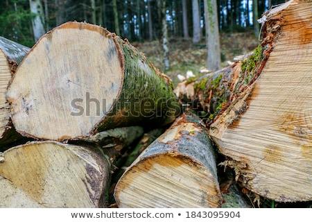 big wood stock photo © morrbyte
