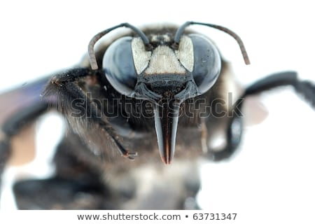 Sucking insect in close up Stock photo © gewoldi