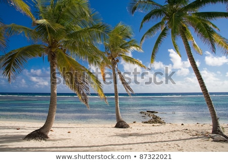 Deserted Tropical Beach in The Cayman Islands stock photo © mosnell