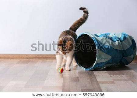 playing with cat stock photo © petrmalyshev