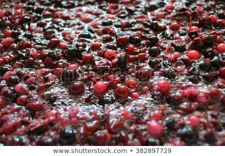 Images of the wine industry Stock photo © photography33