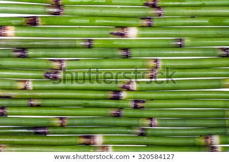 nice reed background stock photo © artush