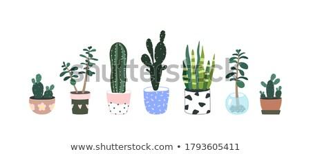Cactus succulente impianti fiori shop Foto d'archivio © ivonnewierink