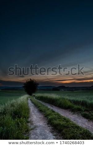 пшеницы · урожай · время · красивой · закат · живописный - Сток-фото © jakatics