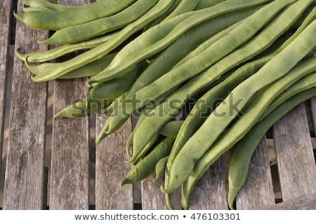 Picking broad beans Stock photo © photography33