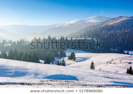 the winter-impression into the frosty afternoon Stock photo © wjarek
