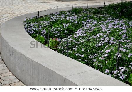 Purple flower behind a fence Stock photo © joseph73